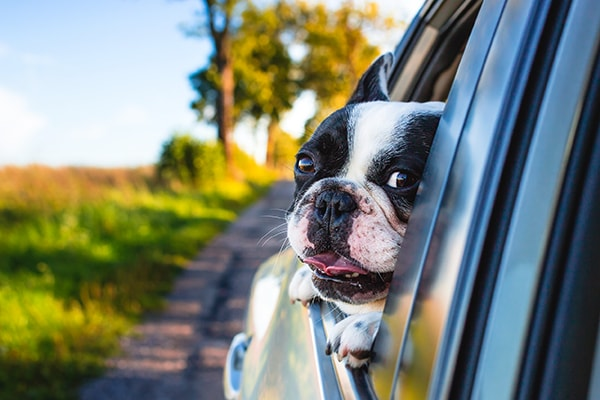 Animal friendly airport transfer services
